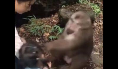 Monkey Jabs Girl