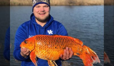 """""""Goldfish"""" Reeled In"""
