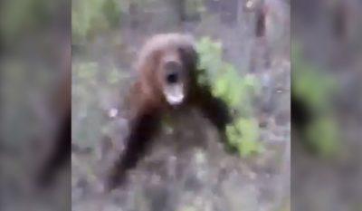 Russian Man Kicks Bear